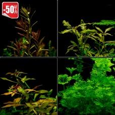 Aкционный набор длинностебельных растений